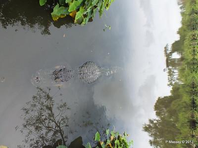 Alligators Gatorland 23-09-2013 17-00-07