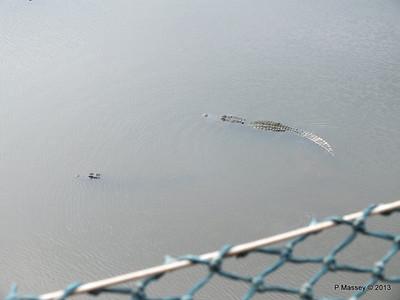 Alligators Gatorland 23-09-2013 15-43-37