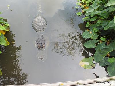 Alligators Gatorland 23-09-2013 17-00-50