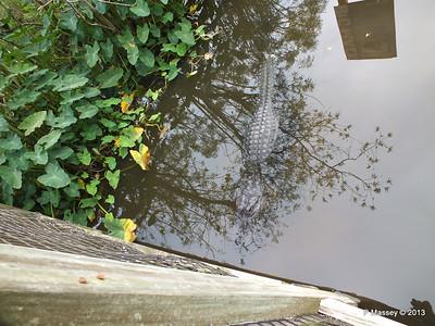 Alligators Gatorland 23-09-2013 17-04-52