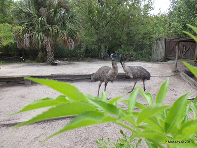 Emu Gatorland 23-09-2013 16-54-18