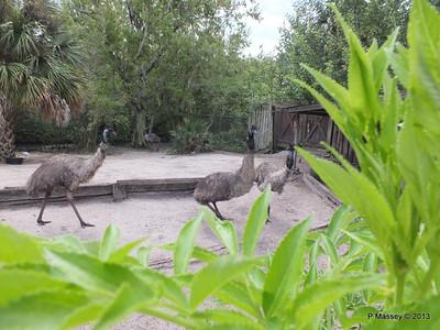 Emu Gatorland 23-09-2013 16-54-14