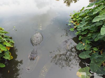 Alligators Gatorland 23-09-2013 17-01-50