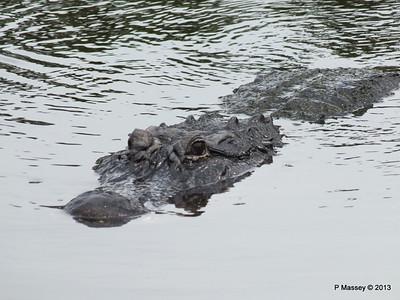 Alligators Gatorland 23-09-2013 16-58-43