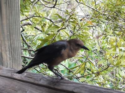 Birds Gatorland 23-09-2013 16-59-39