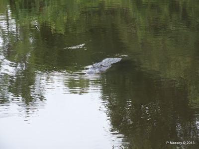 Alligators Gatorland 23-09-2013 16-57-27
