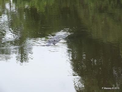 Alligators Gatorland 23-09-2013 16-57-32