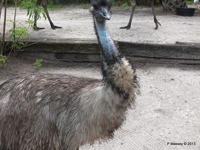Emu Gatorland 23-09-2013 16-54-22
