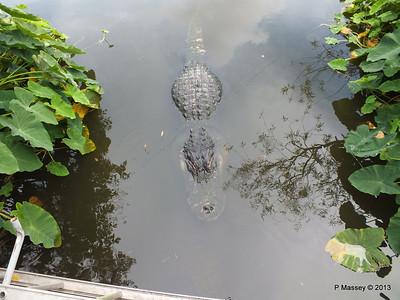 Alligators Gatorland 23-09-2013 17-01-25