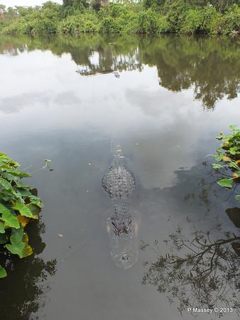 Alligators Gatorland 23-09-2013 17-00-04