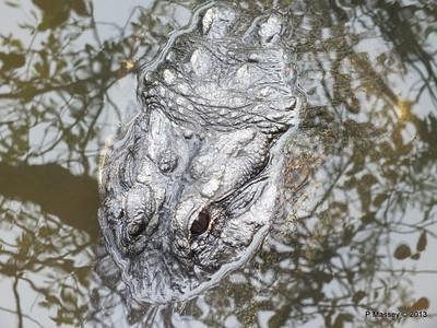 Alligators Gatorland 23-09-2013 17-05-09