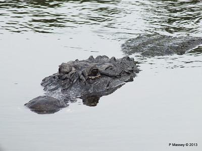 Alligators Gatorland 23-09-2013 16-58-45