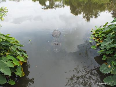 Alligators Gatorland 23-09-2013 16-59-55