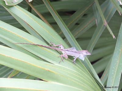 Lizard Shedding Skin Gatorland 23-09-2013 16-48-42
