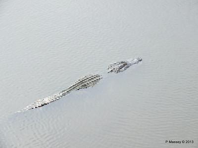 Alligators Gatorland 23-09-2013 15-39-41