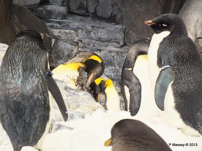 Antarctica Empire of the Penguins SeaWorld 27-09-2013 15-04-43