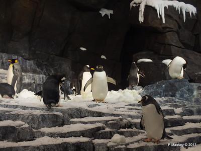 Antarctica Empire of the Penguins SeaWorld 27-09-2013 15-04-10
