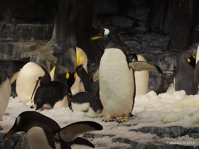 Antarctica Empire of the Penguins SeaWorld 27-09-2013 15-03-49