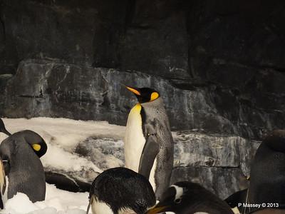 Antarctica Empire of the Penguins SeaWorld 27-09-2013 15-04-21