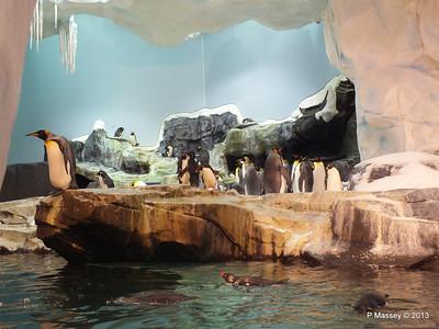 Antarctica Empire of the Penguins SeaWorld 27-09-2013 15-06-44