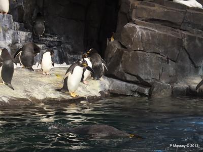 Antarctica Empire of the Penguins SeaWorld 27-09-2013 15-02-55