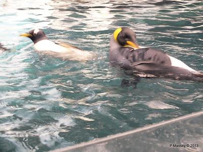 Antarctica Empire of the Penguins SeaWorld 27-09-2013 15-02-47