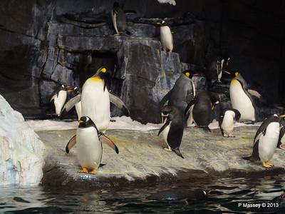 Antarctica Empire of the Penguins SeaWorld 27-09-2013 15-03-04