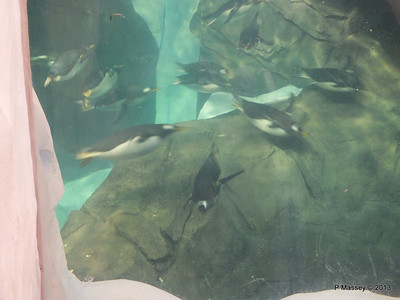Antarctica Empire of the Penguins SeaWorld 27-09-2013 15-06-30