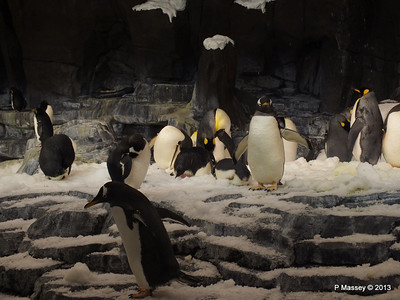 Antarctica Empire of the Penguins SeaWorld 27-09-2013 15-03-53