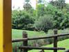 Thomson's Gazelle Busch Gardens 25-09-2013 17-44-47