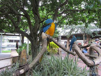 Parrots Gatorland 23-09-2013 17-55-18