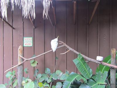 Parrots Gatorland 23-09-2013 17-55-36