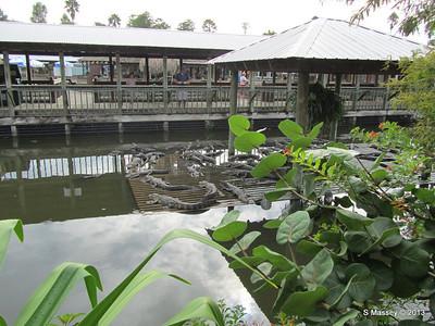 Alligators Gatorland 23-09-2013 15-09-26