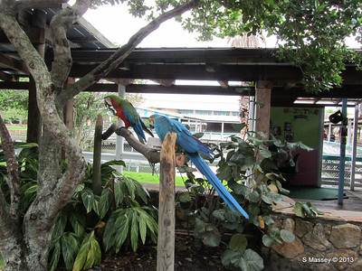 Parrots Gatorland 23-09-2013 17-55-54