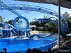 Dolphin Show Blue Horizons Theater SeaWorld 21-09-2013 15-08-05