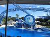 Dolphin Show Blue Horizons Theater SeaWorld 21-09-2013 15-07-16