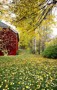 Autumn in Bygdoy
