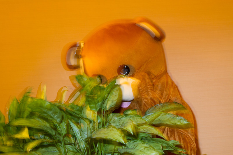 Pedo Bear is Hiding