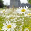 Kilkenny Castle Daisies0390cishdrlps