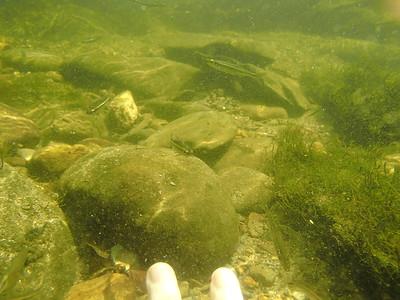 Conasauga Snorkel Hole
