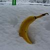 snowy banana
