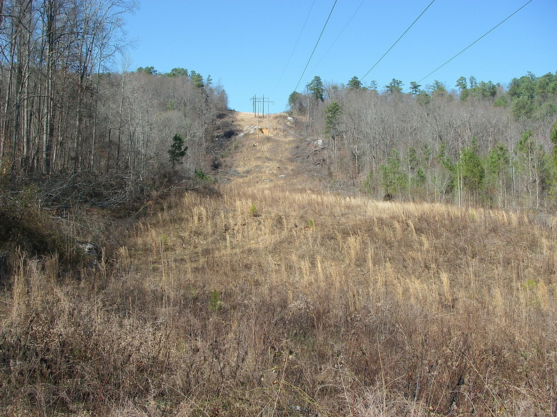 Looking back up at the powerline cut.