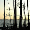 Cypress sillhouette 302c