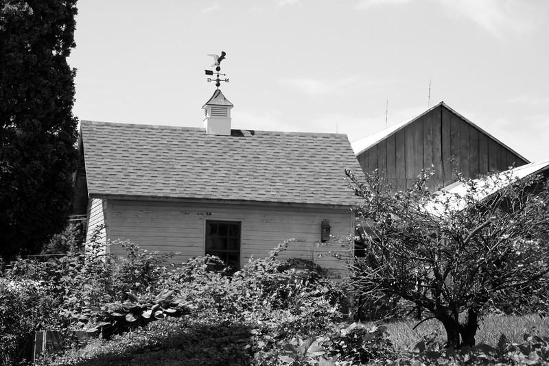 Backyard-Jefferson PA