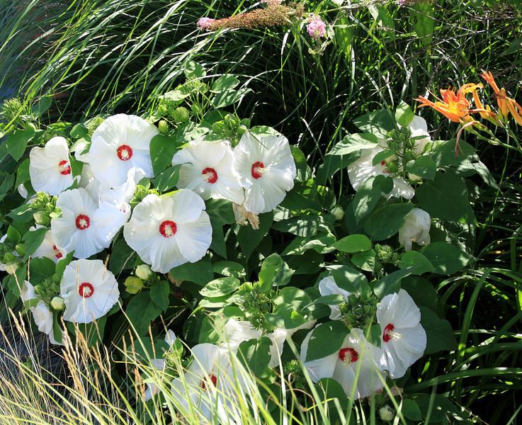 Front yard flowers-Jefferson, PA.