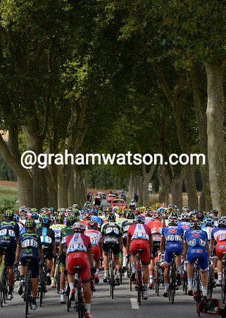 The peloton heads towards the Pyrenees through an allé of Plaine trees...