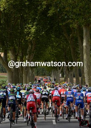 The peloton heads towards the Pyrenees through an allé of Plaine trees...