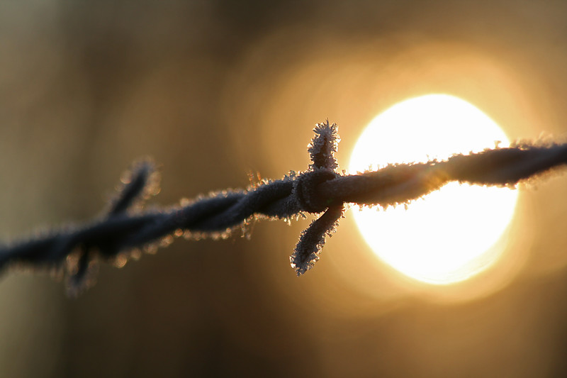 Frozen barbed wire sunrise