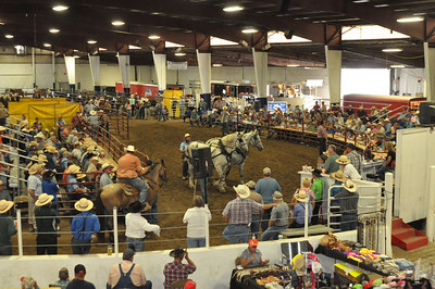 2013 BOONE COUNTY DRAFT HORSE AND MULE SALE