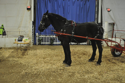2014 Boone County Spring Draft Horse & Mule Sale